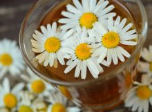 does chamomile tea help you sleep